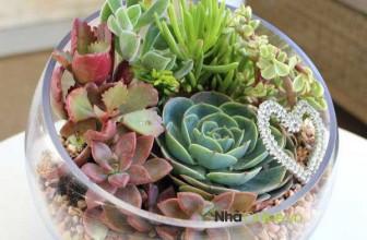 Cách tự chế khu vườn mini để bàn