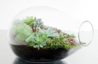 Một vài tips hay để thêm không gian xanh cho căn nhà nhỏ